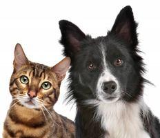 3387041-dog-and-cat.jpg